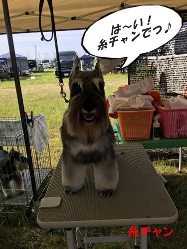 糸大阪連合展2