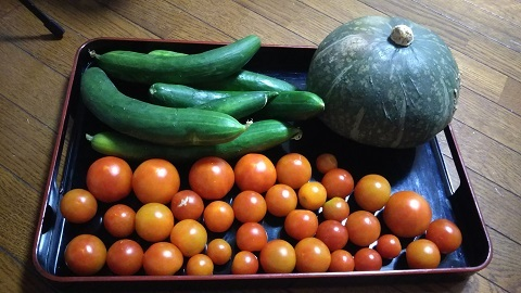 令和元年8月5日夏野菜