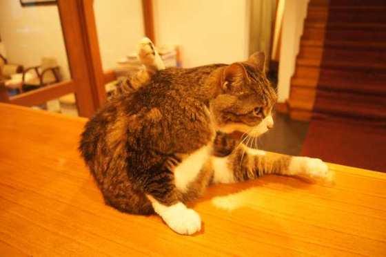 https://blog-001.west.edge.storage-yahoo.jp/res/blog-1f-50/hasebe_neko/folder/1429923/94/57041194/img_2_m?1566567884