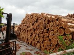 28材木市場