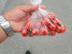 20プチトマト