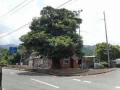 15タブの木