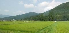 水田と黒井城