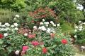 31前庭正面花壇