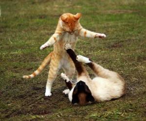 cat-1234950_960_720.jpg