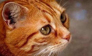 cat-3080965_960_720.jpg