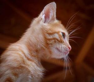 cat-4293185_960_720.jpg