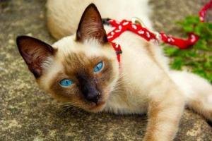 cat-4402234__340.jpg