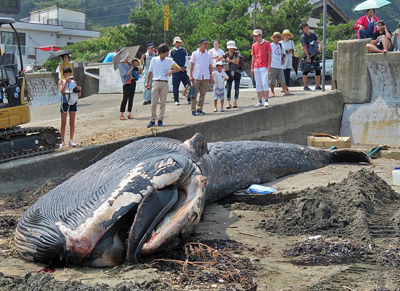 180806,シロナガスクジラ @ 由比ガ浜01