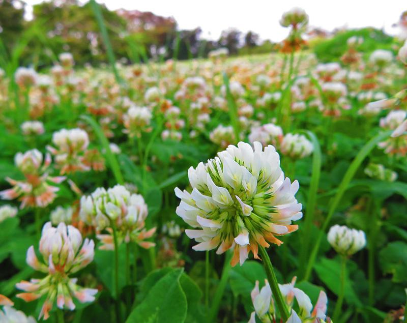 190601,城ヶ島の花たち6