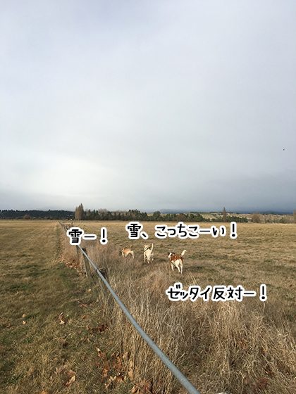 02082019_dog3.jpg