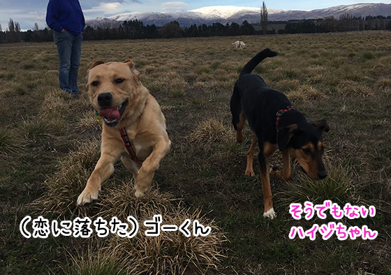 05082019_dog5.jpg