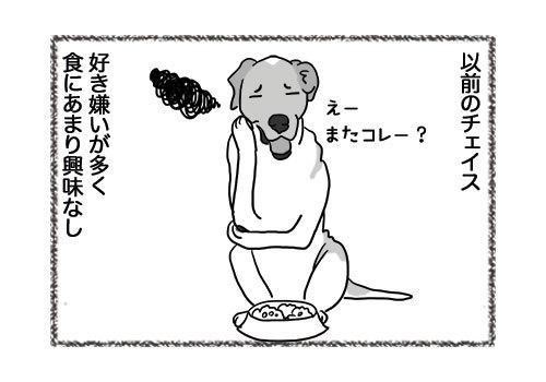 06052019_dog3.jpg
