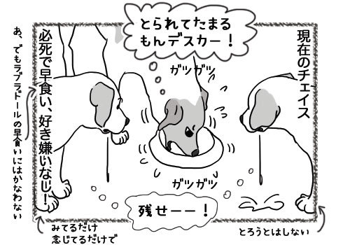 06052019_dog4.jpg