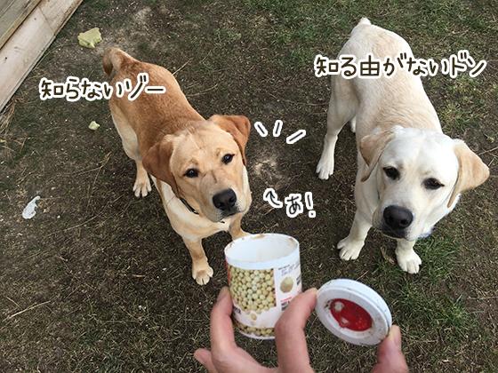 06082019_dog5.jpg