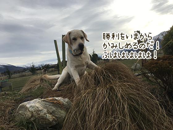 06082019_dog7.jpg