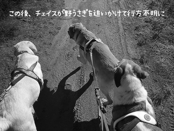 07082019_dogpic2.jpg