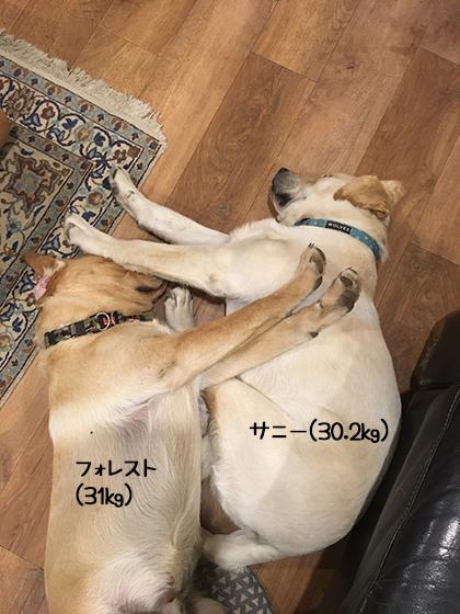 08072019_dogpic1.jpg