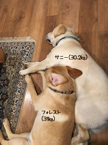 08072019_dogpic3.jpg