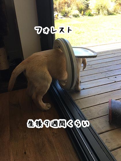 16072019_dogpic1.jpg