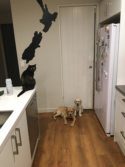 16082019_dog5Before.jpg