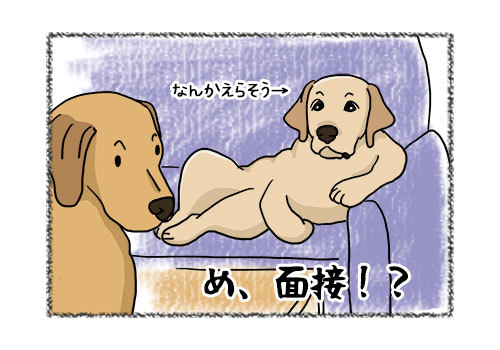 21052019_dog1.jpg