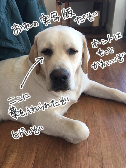 25082019_dogpic2.jpg