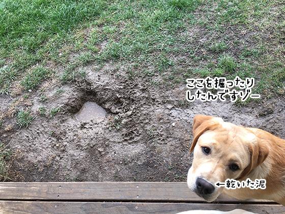 28042019_dog7.jpg