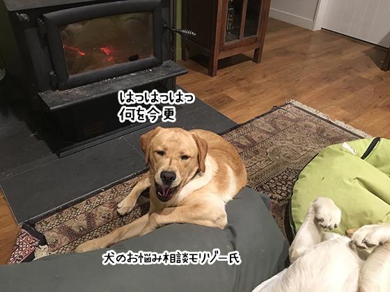 31072019_dog2.jpg
