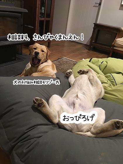 31072019_dog5.jpg