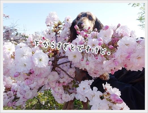 fc2_2019-05-24_08.jpg