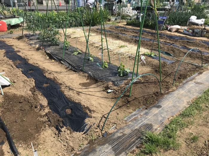 家庭菜園2019