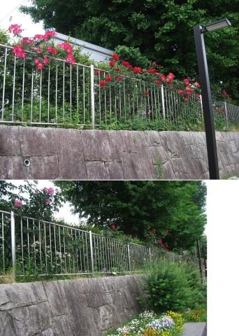 05与野本町駅周辺のバラ(連結その5)