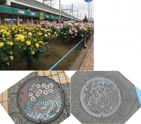 04与野本町駅周辺のバラ(連結その4)