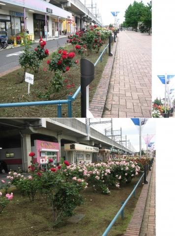 02与野本町駅周辺のバラ(連結その2)