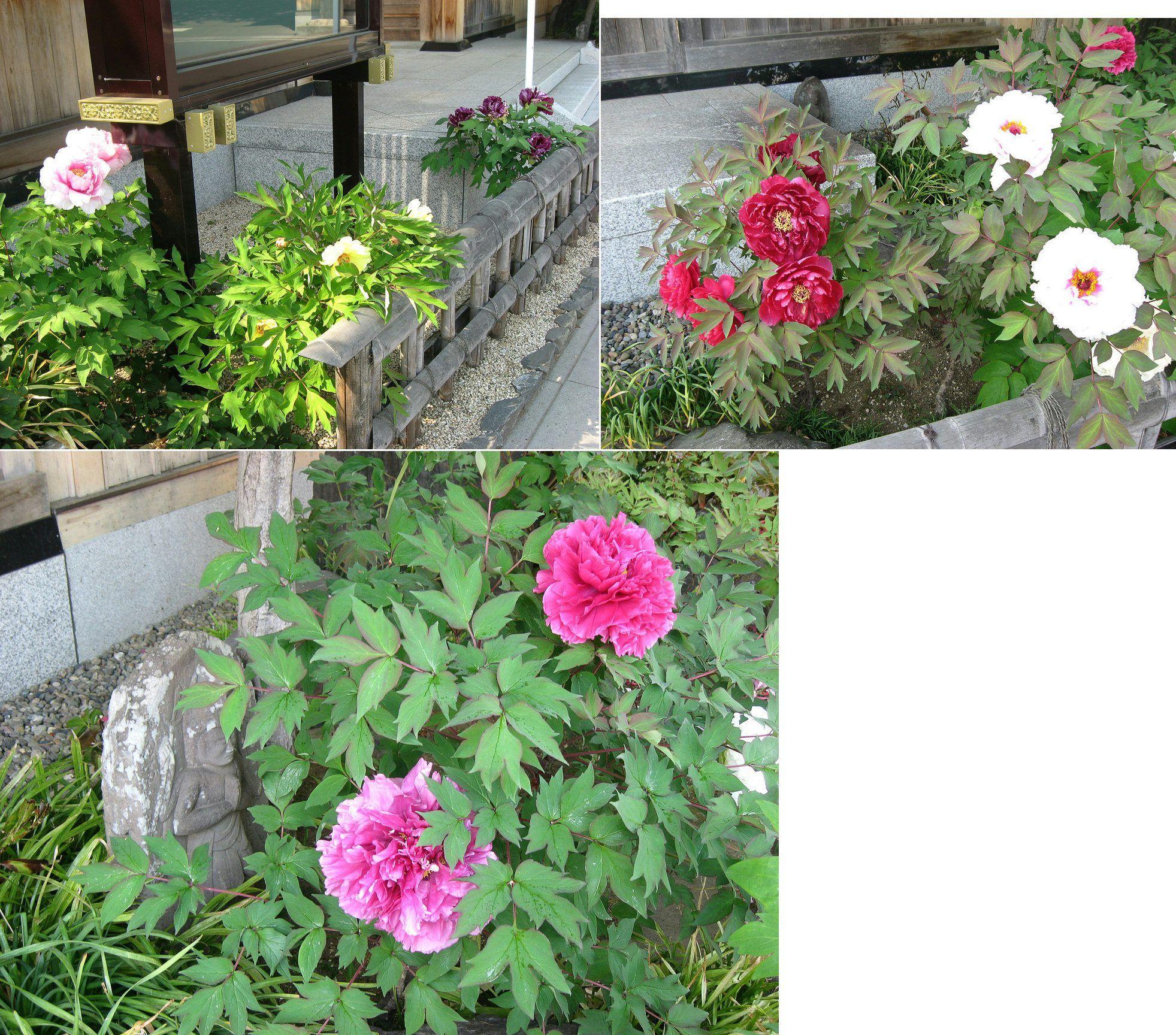 oura_onrinji201404_2.jpg