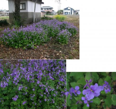 sano_ryushinji201604_9