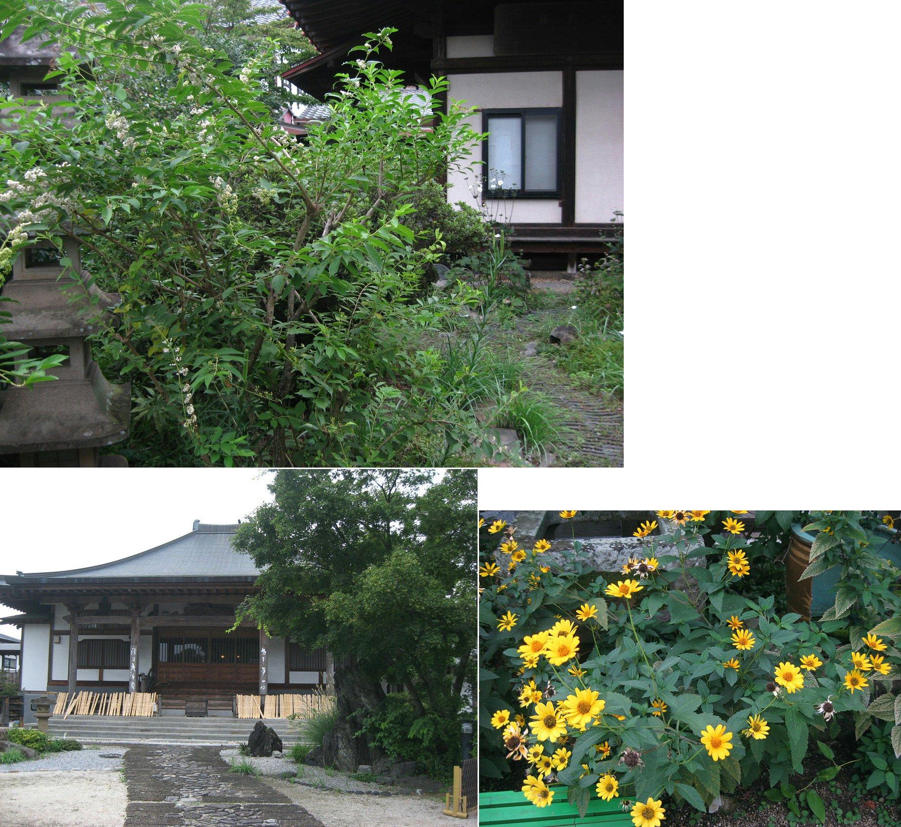 sano_tokoji201409_20.jpg
