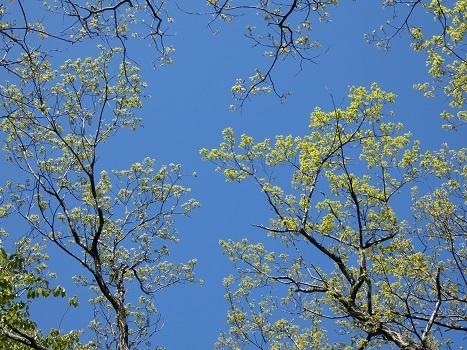 きれぎれの風彩 「越後丘陵公園 5月4日」190526-05