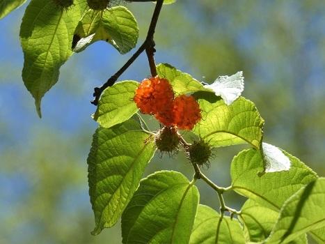 きれぎれの風彩 「北本自然観察公園 0616」190727-03