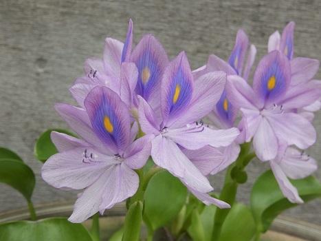 きれぎれの風彩 「花と緑の振興センター 0813」190823-07