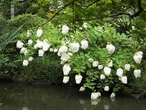きれぎれの風彩 「花と緑の振興センター 0813」190823-08
