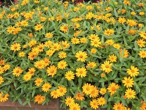 きれぎれの風彩 「花と緑の振興センター 0813」190823-10