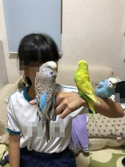 チビと鳥②