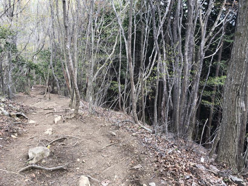 三頭山周遊コース156