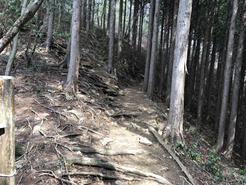 三頭山周遊コース161