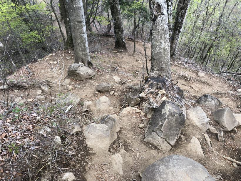 三頭山周遊コース153