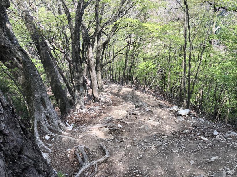 三頭山周遊コース177
