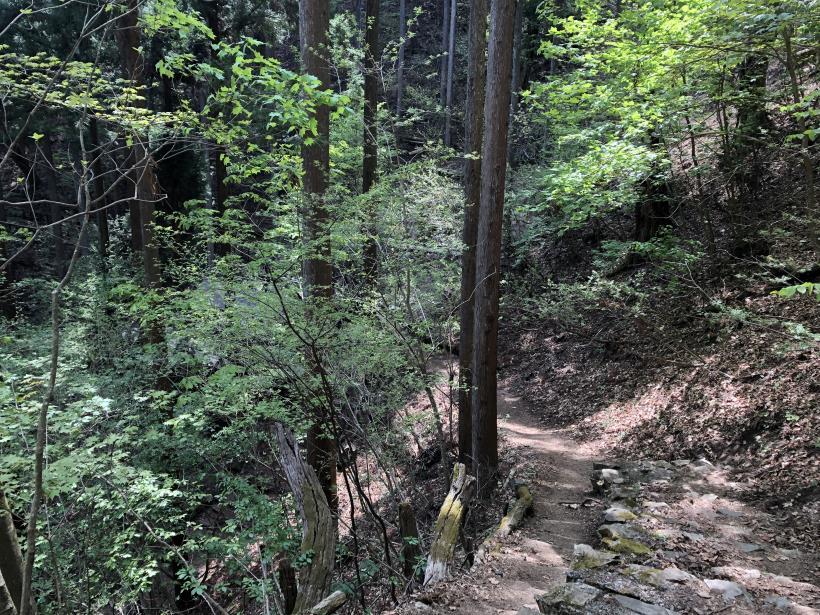 三頭山周遊コース184