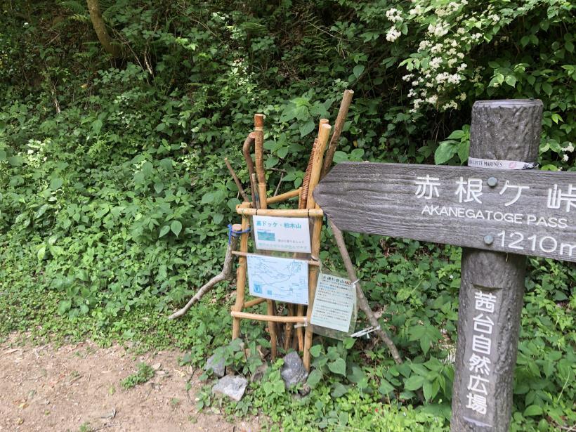 柏木山の作業道02